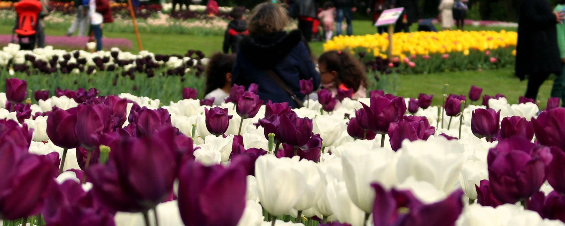 La Fête des tulipes - Saint-Denis